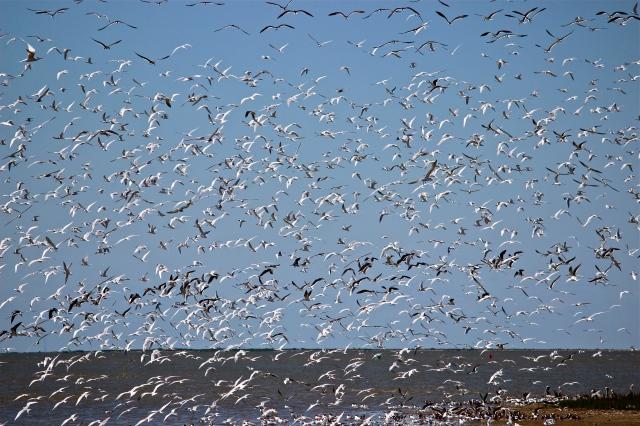 dense flock